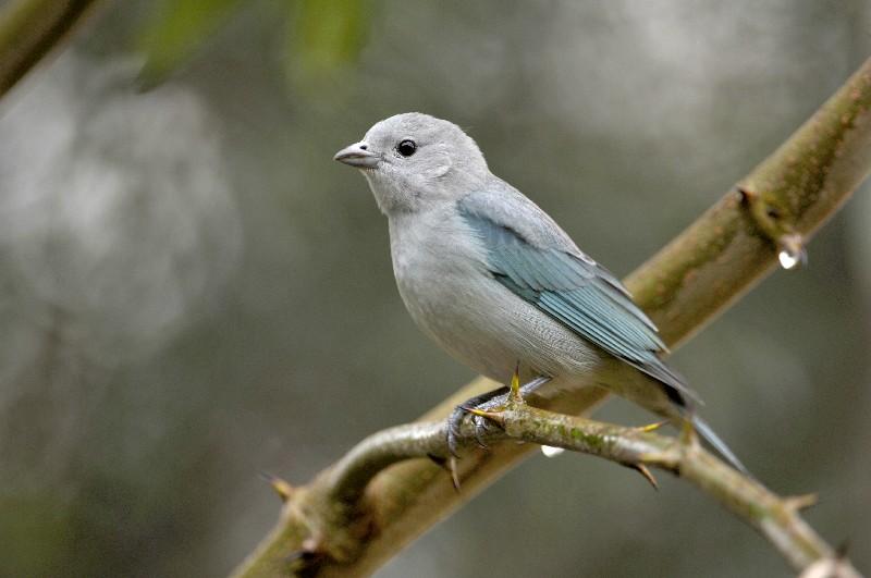 Well-known Dez aves que você pode avistar na Mata Atlântica - Revista Ecológico RJ67