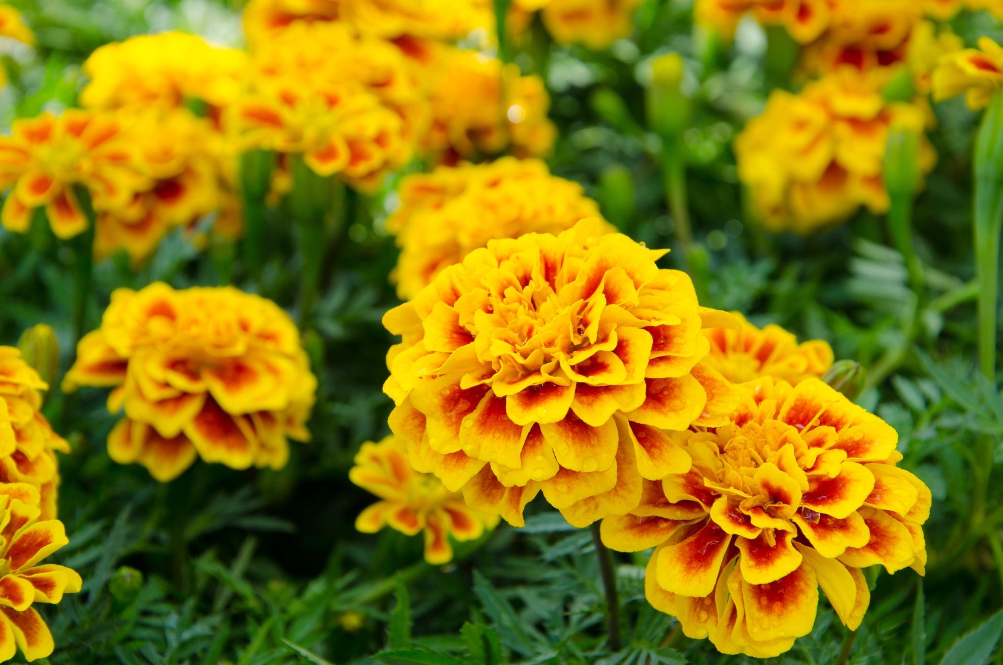 Tr s flores ideias para enfeitar a casa revista ecol gico - Flores que aguantan el sol ...